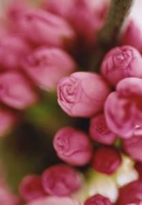 spring blossom2